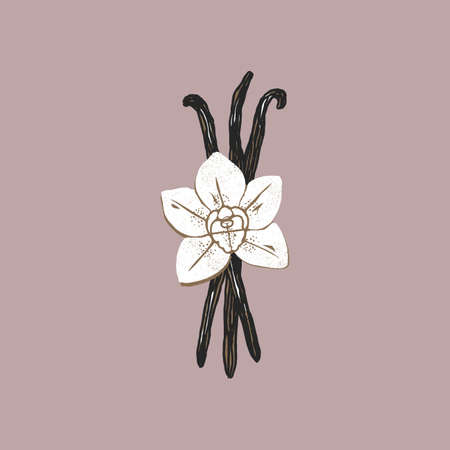 Vanilla beans and flower illustration. Minimalist abstract textured style.