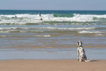 A dog waiting for his master by the oceans edge photo