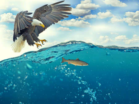 Eagle in blue sea