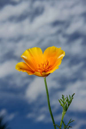Yellow flower against cloudy sky Stock Photo