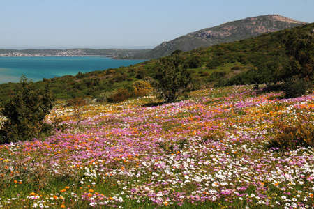Hill covered in spring flowers