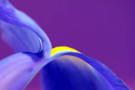 abstract iris photo