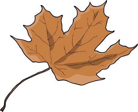 dry: Dry autumn leaf Illustration