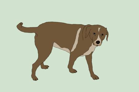 brown: Brown dog