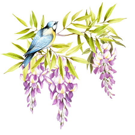 chickadee: Bird on a branch of wisteria. Hand draw watercolor illustration Stock Photo