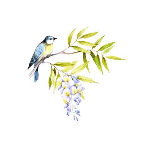 Vogel op een tak van blauweregen. Hand tekenen aquarel illustratie