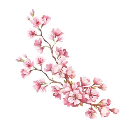 Tak van kersenbloesems. Hand teken aquarel illustratie. Stockfoto