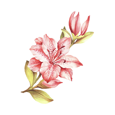 Composition with blossoming lilies. Hand draw watercolor illustration