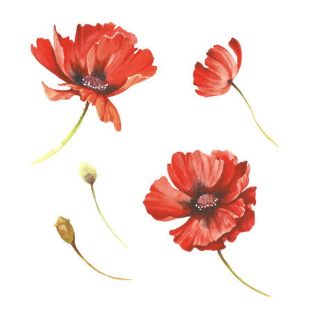 Set of poppies flowers. Hand draw watercolor illustration
