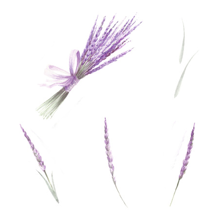 A set of lavender flowers. Hand draw watercolor illustration Stock Photo