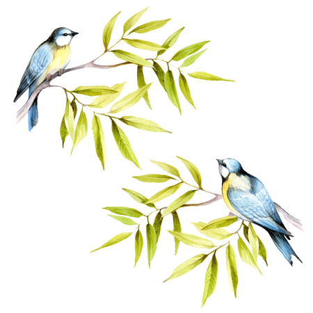 chickadee: Birds on a branch. Hand draw watercolor illustration.