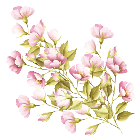 dogrose: The flowers of wild rose. Watercolor illustration Stock Photo