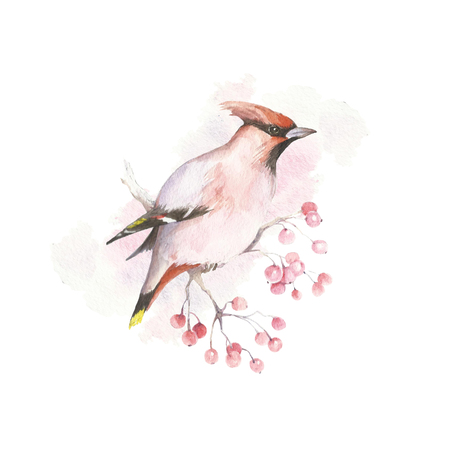 The image of waxwings on a branch. Watercolor illustration Stock Photo
