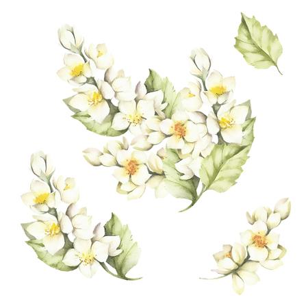 De set van de takje van Jasmine.Watercolor illustratie Stockfoto