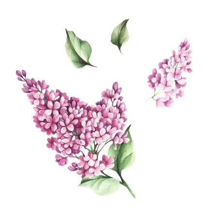 The set of images of flowers and leaves of lilac. Watercolor illustration