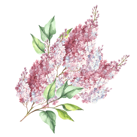Flowering branch of lilac. Hand draw watercolor illustration.