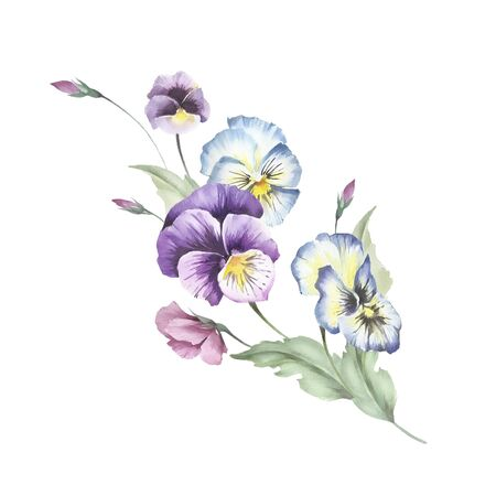 Bouquet of pansies. Hand draw watercolor illustration. Stock Photo