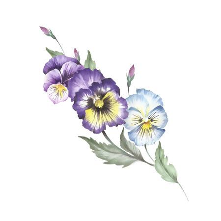 パンジーの花束。手は、水彩イラストを描いています。