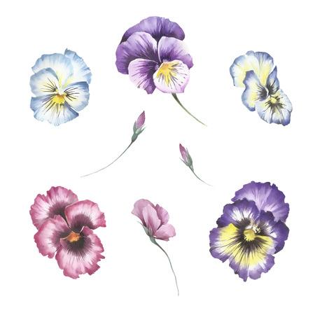 花パンジーのセットです。手は、水彩イラストを描いています。