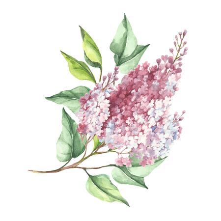 ライラックの開花枝。手は、水彩イラストを描いています。