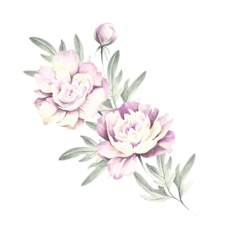 Bouquet of peonies. Hand draw watercolor illustration