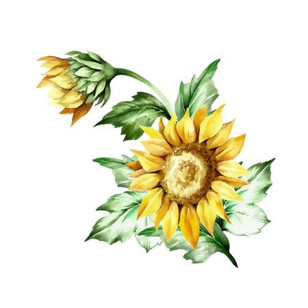 Zusammensetzung mit Sonnenblumen Hand zeichnen Aquarell Illustration. Standard-Bild - 78749276