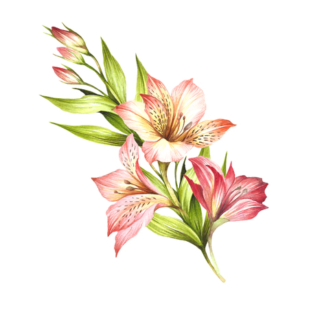 Composition with alstroemeria in hand drawn watercolor illustration.