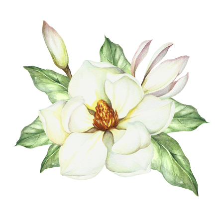 Composition with magnolia in hand drawn watercolor illustration.