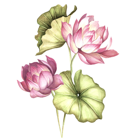 Composition with lotus. Hand draw watercolor illustration