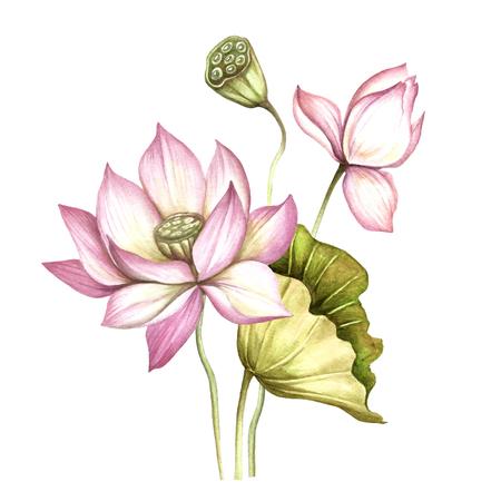 Komposition mit Lotus. Hand zeichnen Aquarellillustration Standard-Bild - 88224011