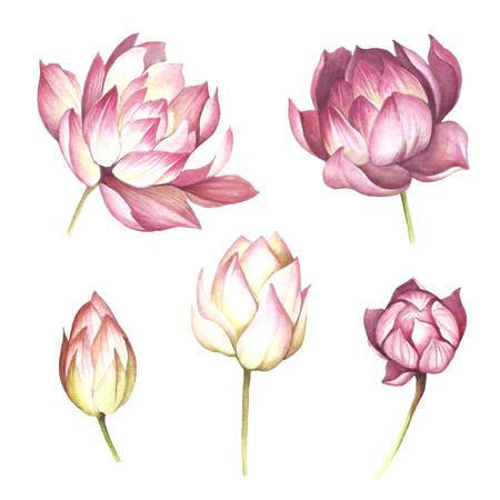 Set with flowers lotus. Hand draw watercolor illustration. Stock Photo
