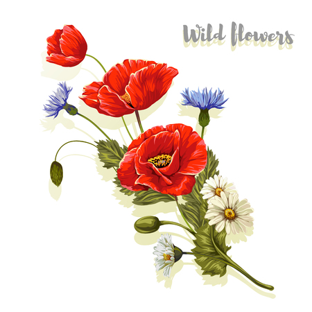 Composition with poppies and chamomiles. Vector illustration