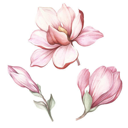 Set of blooming magnolia. Hand draw watercolor illustration 免版税图像