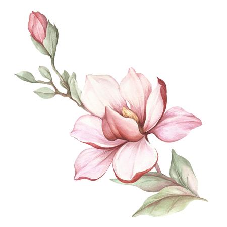 Afbeelding van bloeiende magnolia tak. Aquarel illustratie. Stockfoto