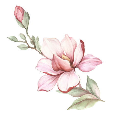 Image of blooming magnolia branch. Watercolor illustration.