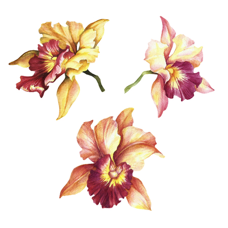 Set of Orchids. Hand draw watercolor illustration. Stock Photo
