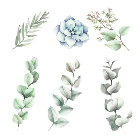 Set of leaves eucalyptus and succulent on white background. Hand draw watercolor illustration.