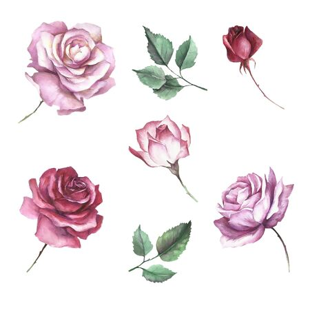 Set of flowers roses. Hand draw watercolor illustration.