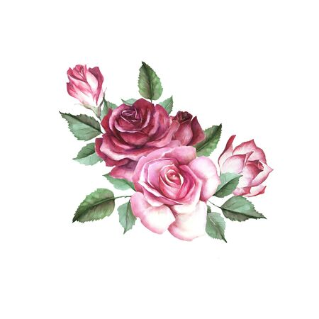 Roses and buds bouquet. Isolated on white background for your design. Watercolor illustration.