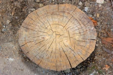 Tree rings Stock Photo
