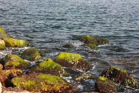 Green Algaes over rocks seaside