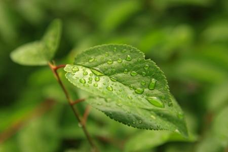 Green tree leaf with rain drops macro
