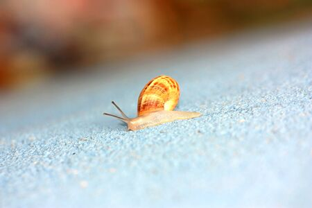 Single snail crawling on a wall macro shot with copy space Stock Photo