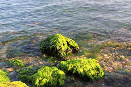 Green algaes over rocks at the coastline