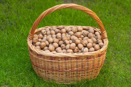 circassian: Basket of walnuts