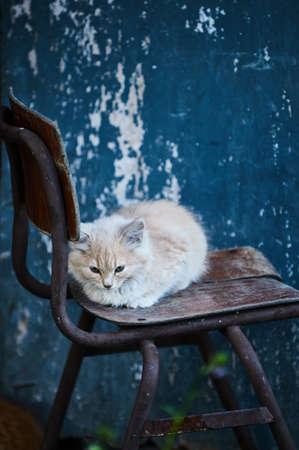 猫は思慮深く軽蔑します。通りの写真。青色の背景色。 写真素材