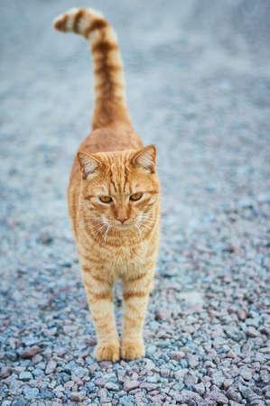 歩道上に立っている思慮深い猫。 写真素材