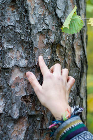 french manicure sexy woman: Hand female finger touch bark of tree Stock Photo