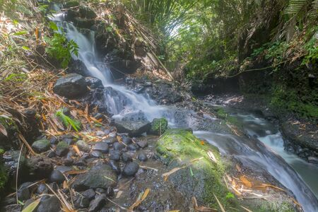 a waterfall that has mossy black stones, and is surrounded by green plants Standard-Bild