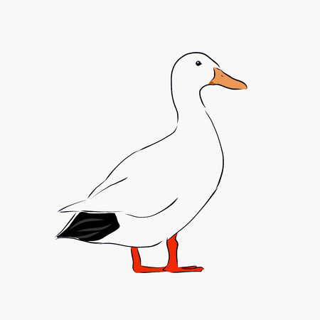 illustration of a black and white duck Illustration